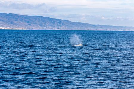 Whale Watching  Dana Point California Stock Photo