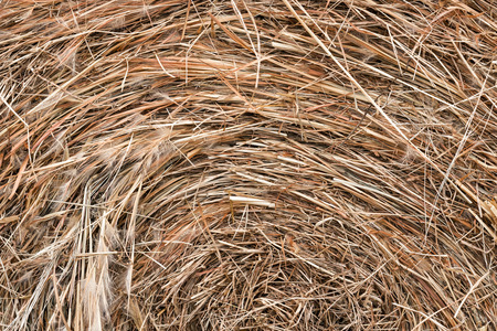 Close up photo of a round bale of hay