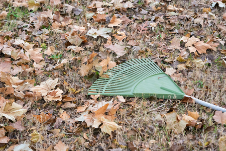 Yardwork - Rake laying on ground near Fall  Autumn leaves  ready to be racked