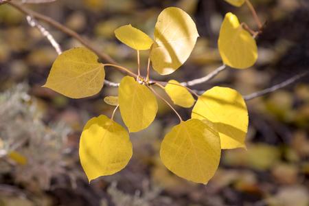 Yellow autumn leaves Imagens