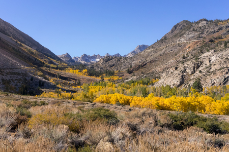 Fall colors in the mountains of the Eastern Sierras beautiful yellow and gold colors. Imagens