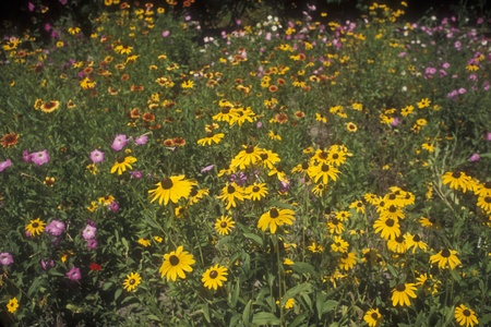 Butterfly farm wildflower garden.