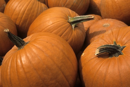 Pumpkins displayed as if for sale at a market or a farmstand.