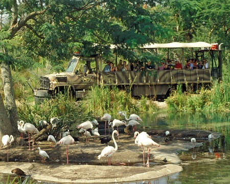 Tourists in safari vehicle watch wild birds at Disney Animal Kingdom, Orlando, Florida.
