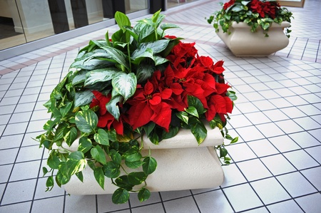 Planter pots with ivy and poinsettia flowers inside shopping mall lobby in Florida.