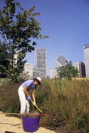 Gardener clears weeds in Lurie Garden in Millennium Park, in downtown Chicago, Illinois, USA.