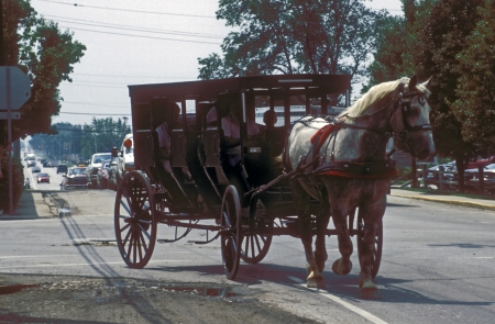 An Amish horse drawn wooden carriage carrying a family pulls onto a busy street and automobiles must wait . Editorial