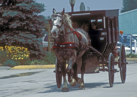 Dapple grey horse pulls wooden Amish carriage with man and girls past city parking lot and parked cars.