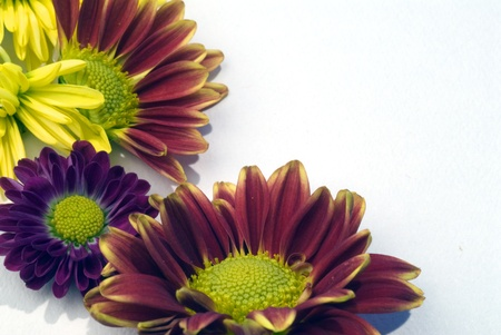 Colorful fall chrysanthemum flowers in purple, red, and yellow form a border for your message
