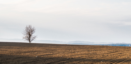 sidelight: Alone tree standing on the horizon of a field full of morning sun