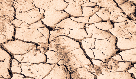 cranny: Parched earth in summer heat. In place of fertile soil with plants is cracked dead surface of dry mud.