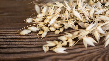 Beautiful dry oat on a wooden table. Decorative detail of cereal spikes on brown vintage background.