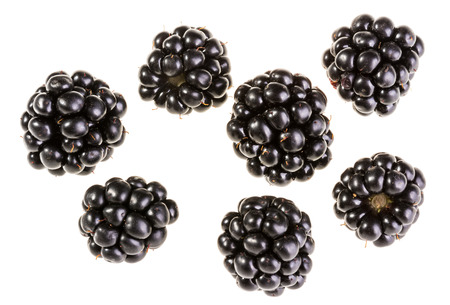 Group of delicious juicy forest blackberries. Collection of individual black fruits isolated on white background. Reklamní fotografie - 85256594