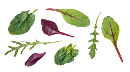 Leaf of arugula, red beet, spinach and chard. Collection of fresh healthy herbal and vegetable leaves full of vitamins and antioxidants. Isolated on white background.