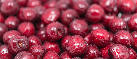 Beautiful sweet cherries close-up with water drops. Pile of washed ripe cherry fruits. Texture of fresh healthy berries full of vitamins and a yummy juice. Panoramic background. Small depth of field.