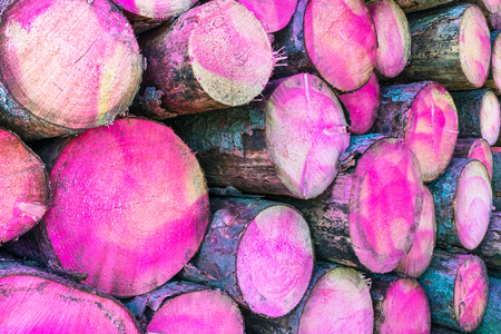 Tree trunks painted a pink color in section. Woodpile close-up. Background of raw wooden logs with bark and magenta stains. Wood stockpile texture. Idea of logging, lumbering, forestry, deforest, eco.