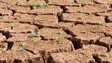 Close-up of dry cracked soil with sprouting grass. Brown abstract texture. Drought with growing green grass blades. Hope concept. Idea of eco, extremely hot weather, climate change and global warming.