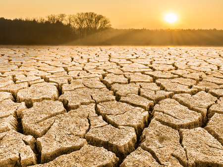 Parched cracked soil in landscape at sunrise. Close-up of drought in a sunlit waterless nature. View of forest, sky and glowing sun in a background. Idea of ecology, climate changes, extreme weather.