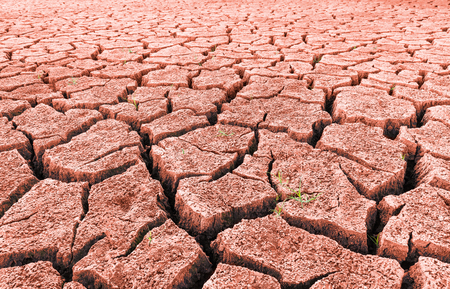Red arid desert with sprouting grass and cracks. Close-up of split dry land with surviving green growth. Abstract texture of drought. Barren landscape. Hope concept. Idea of extreme weather, ecology. Stock Photo