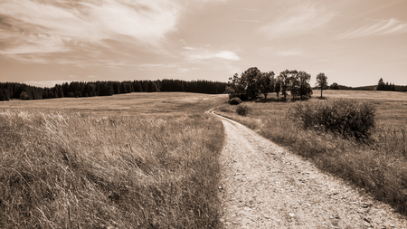 Dirt road and a group of broadleaf trees in rural landscape. Natural scene with off-road path under summer sky. Grass on meadow, field and coniferous forest on the horizon. Background in brown tones.