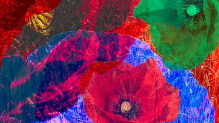 Artistic digital collage of colorful blooms close-up. Psychedelic floral background from beautiful common poppy flowers and wheat field. Fantastic fresh modern style with an expressive surreal effect.