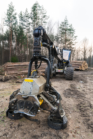 Forestry harvester machine. Felling head detail. Logging in damaged woods. Hydraulic heavy vehicle and log stack. Forest terrain. Bark beetle calamity. Timber industry, deforestation, climate changes.