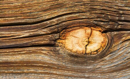 Bright natural wood knot detail in brown texture of aged cracked plank. Abstract wooden background. Beautiful ancient rough surface with cracks, tree rings and a pale round knag. Old shabby cut board.