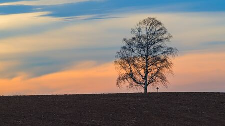 Alone birch tree silhouette in wind on blue sky background with red glow. Betula. Tranquil landscape with brown plowed field and small crucifix on horizon. Rural scene before sunset in windy weather. Stock Photo