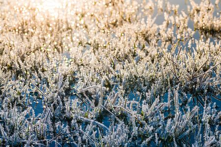 Glittering hoar frost with icy crystals on grass blades in morning sunrise. Artistic closeup of beautiful white rime in wet meadow with sun reflections in blue water surface. Arrival of spring. Bokeh.