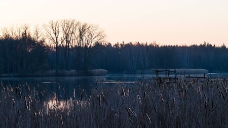 Morning dawn over dark water surface. Common bulrush. Typha. Artistic scene of spring sunrise in rural landscape. Dry reeds, trees and reflection of glowing sky on Jezero pond, Sezimovo Usti, Czechia. Stock Photo