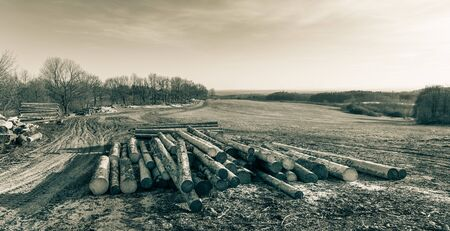 Wooden logs and trees along muddy dirt road in spring rural landscape. Heap of cut wood trunks, meadow and forests in natural view. Artistic panoramic scenery in cyan-brown tone. Pikov, South Bohemia.