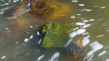 Abstract close-up of cloudy flowing water surface in natural river bed. Spring thawing in fast running stream with wet green mossy stone and brown boulders. Swift creek with visible white streamlines. Zdjęcie Seryjne