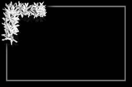 Black and white border forsythia flowers in background with gray frame. Romantic natural floral motif of delicate fragile blooms on twigs in top left corner and blank space for notice. Love and death.