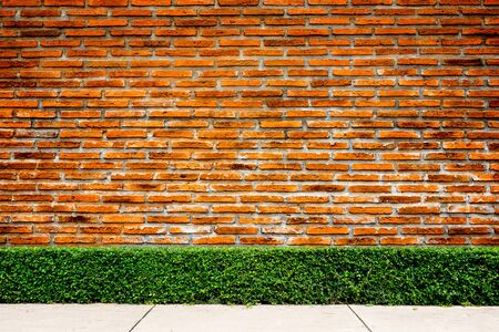 tree green wall with concrete floor on brick wall Stockfoto