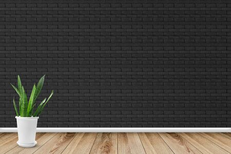 empty room with a black brick wall and Sansevieria plant