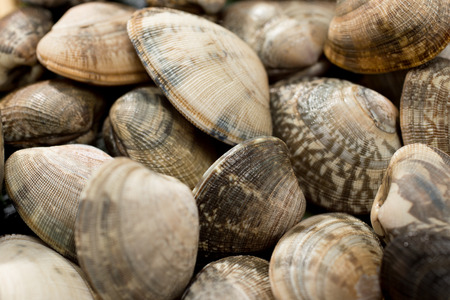 Japanese littleneck clam