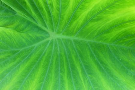 asymmetry: green leaf texture