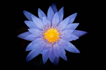 close-up view of water lily with dark background Stock Photo - 13991955