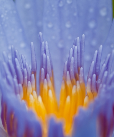 close-up view of water lily with dark background Stock Photo - 13991959
