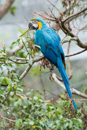 Colorful parrot on the tree branch