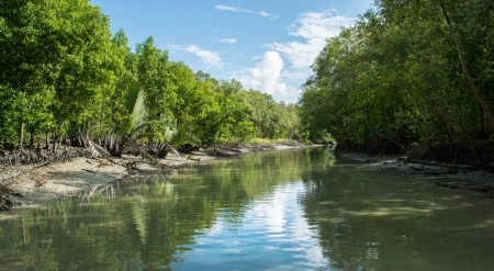 Mangrove forest alongside a river in Penang Stock Photo