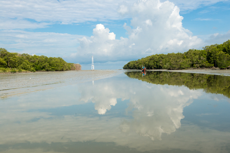 Mangrove forest at the river mount in Penang