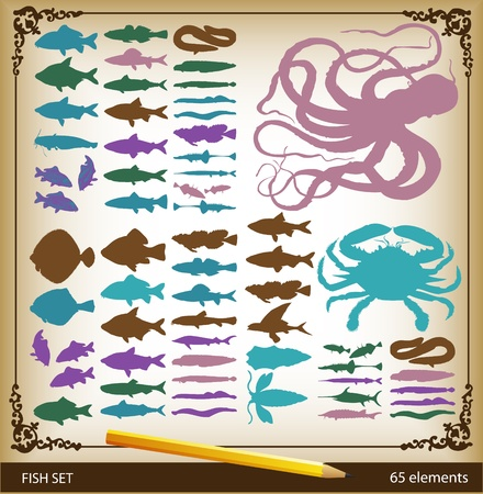 plaice: Fish set vintage element vector background