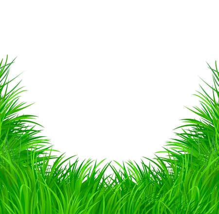 grass: Green grass   Illustration