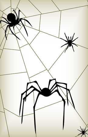 spider' s web: vintage Halloween spider background illustration