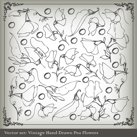 sweet pea: Sweet peas vintage background vector Illustration