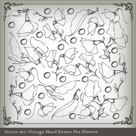 green peas: Sweet peas vintage background vector Illustration