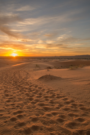 desert footprint: Caravan camel footprints in the Sahara desert when the sun rised