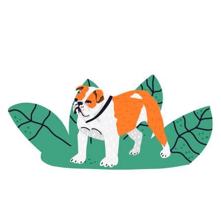 hand drawn illustration of Bulldog
