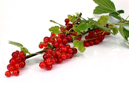 A panicle of red currants with green leaves, macro, isolated on white background